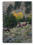 Elk - 1964 Spiral Notebook