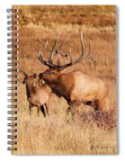 Elk And Mate In Rocky Mountain Meadow Spiral Notebook