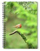 English Robin Erithacus Rubecula Spiral Notebook