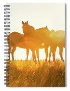 Equine Glow Spiral Notebook