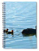 Eurasian Coot And Offspring In Ria Formosa. Algarve, Portugal Spiral Notebook