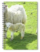 Ewe With Lambs Spiral Notebook