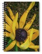 Extraordinary Spiral Notebook