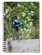 Fairy-wren 3 Spiral Notebook