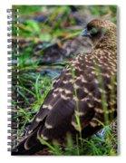 Falcon Chimango Caracara, Tierra Del Fuego National Park, Ushuaia, Argentina Spiral Notebook