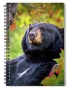 Fall Black Bear Spiral Notebook