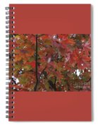 Fall Collage Spiral Notebook