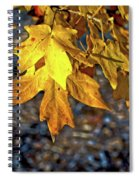 Fall Has Sprung Spiral Notebook