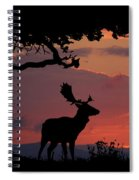 Fallow Stag At Sunset Spiral Notebook