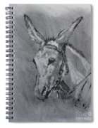 Family Mule Spiral Notebook