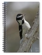 Female Downy Woodpecker Spiral Notebook