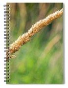 Field Grass Spiral Notebook