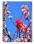 Pinks And Blues Spiral Notebook
