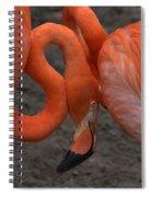 Flamingo Couple Spiral Notebook