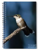 Flick Of The Tongue - Ruby-throated Hummingbird Spiral Notebook