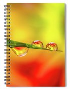 Flower In Water Droplet Spiral Notebook