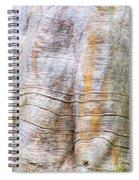 Foster Trees 4 Spiral Notebook