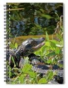 Gator Brood Spiral Notebook