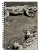 Gator  Park Residence Spiral Notebook