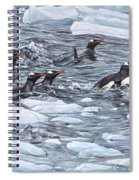 Gentoo Penguins By Alan M Hunt Spiral Notebook