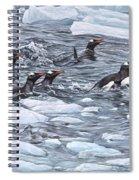 Gentoo Penguins By Alan M Hunt Spiral Notebook