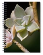 Ghost Plant Spiral Notebook