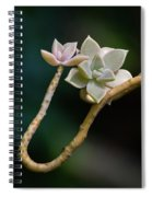 Ghost Plant Succulent Spiral Notebook