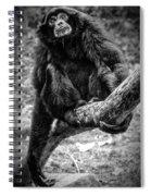 Gibbon Spiral Notebook