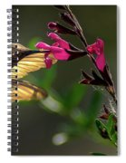 Glowing Wings Of A Hummingbird Spiral Notebook