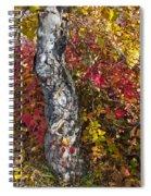 Gnarled Tree Trunk - Dezadeash Lake - Yukon Territory  Spiral Notebook
