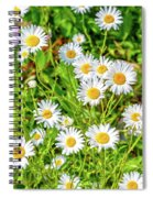 Goat Island Wild Daisies Maine Spiral Notebook