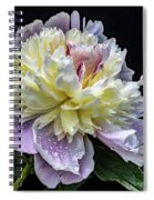 God's Perfection In A Festiva Maxima Peony Spiral Notebook