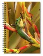 Gold Dust Gecko  Spiral Notebook
