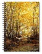 Golden Autumn Light Spiral Notebook