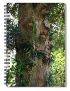 Good Things Come In Trees Spiral Notebook