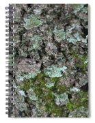 Gray Treefrog - 8522-2 Spiral Notebook
