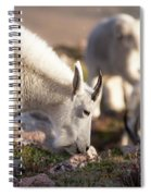 Grazing On Mount Evans Spiral Notebook