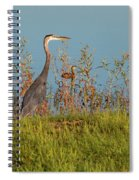Great Blue Heron Looking For Food Spiral Notebook