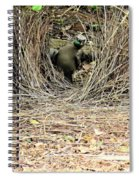 Great Bowerbird With Nut Spiral Notebook