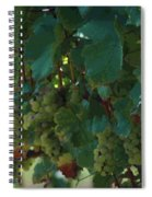 Green Grapes On The Vine 4 Spiral Notebook