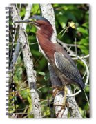 Green Heron In The Glades Spiral Notebook