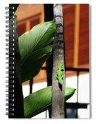 Green Lizard Spiral Notebook