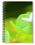 Green Wilderness Spiral Notebook