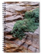 Growing From The Rock Terrain In Zion  Spiral Notebook