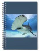 Hammerhead Shark Spiral Notebook