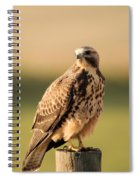 Hawk On The Edge Of A Field Spiral Notebook