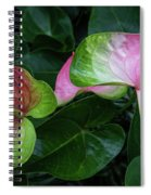 Hearts At Ease Spiral Notebook