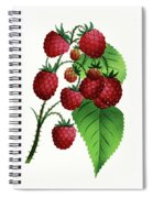 Hepstine Raspberries Hanging From A Branch Spiral Notebook