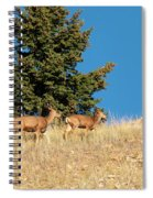 Herd Of Colorado Deer Spiral Notebook