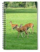 Herd Of Deer Spiral Notebook